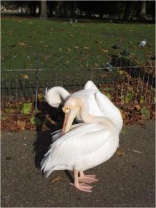 самая-романтичная-фотография-из-Лондона-ever_tn
