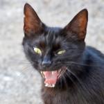 Круши-ломай! или в чем смысл жизни кота