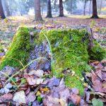Лесной позитив посреди недели