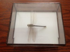 Dragonfly_in_glass_tomb_large