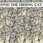 Я нашла кота, а вы?