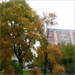 Позитив посреди недели: московская осень